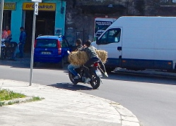 Ride'm cowboy ! In the city of Palermo Sicily