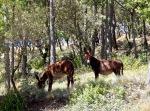 Cute donkeys