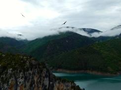 Bearded vultures soar high above us