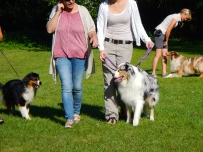 Australian Shepherds on show
