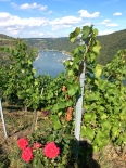 Rhine Valley vineyard