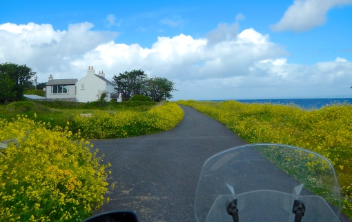Small roads and an abundance of wild flowers along Irelands west coast