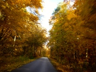 Riding through beautiful Autumn forest in Polands Masurian Lakes district