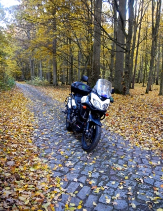 This small cobbled stone road was found in Polands Masurian Lakes forests, just perfect..