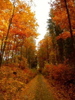 Small Polish forest roads in autumn, how goods that