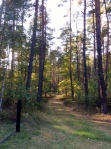 A beautiful peaceful forest today, with a horrific, not so peaceful past