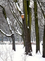 Many trees in the parks have new bird and squirrel boxes for the cold weather