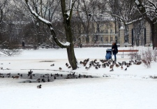 Mum still brings the baby out for a walk in the snow and to see the ducks in Krasiński Park