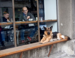 This German Shepherd was patiently waiting whilst his masters had coffee inside the cafe - so cute and handsome too