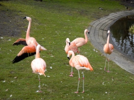 Exquisite flamingos at Praga Zoo - they are so perfect they do not look real