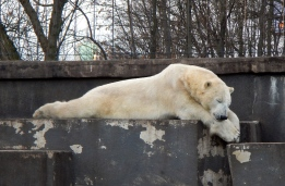 Sleepy time at Praga Zoo - What a handsome fellow!