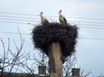 Mr and Mrs Stork