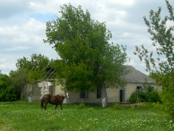 Just a lovely pic - many horses to be seen in Moldova - they work very hard
