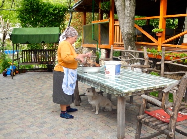 Preparing the chooks for cooking, with one 'hopeful Harry' patiently waiting under the table!!