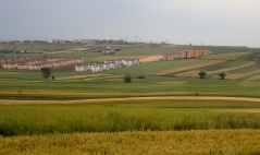 In the countryside north of Istanbul - the apartment blocks just seem to rise up from the paddocks