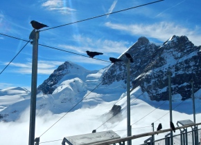 Seagulls of the mountains, Blackbirds waiting for a crumb