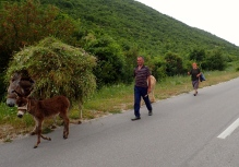 Romania - donkeys work very, very hard