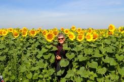 Sunflowers a plenty in Eastern Europe