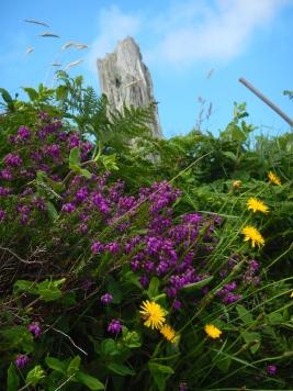 Spring wild flowers on Dingle Peninsula